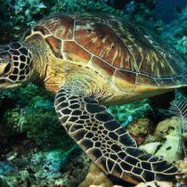 Los ríos y mares ya perdieron más del 80 por ciento de su fauna