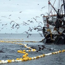 Gobierno inicia la licitación más importante de jurel desde que entró en vigencia la polémica Ley de Pesca