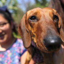 Los perros tienen memoria episódica y se acuerdan de lo que hacen sus dueños