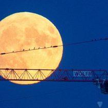 [VIDEO VIDA] Así se admiró la súper Luna, desde Nueva York a Madrid