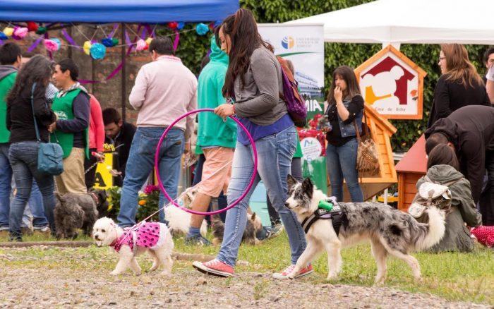Un panorama de mascotas organizado por estudiantes y docentes de la UC de Temuco
