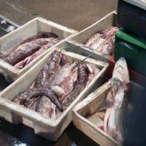 El colapso del Terminal Pesquero: multas impagas, sumarios sanitarios y graves problemas en la cadena de frío de los pescados