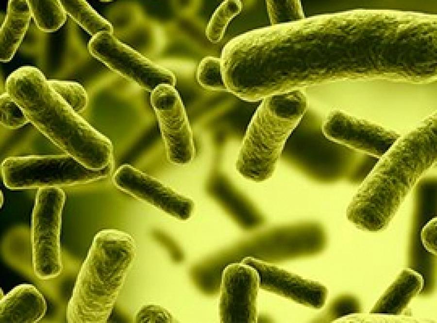 Científicos estudian bacterias chilenas en busca del