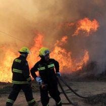 1.775 hectáreas afectadas por incendio forestal en Ercilla