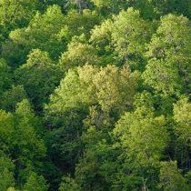 El papel de los bosques frente al cambio climático