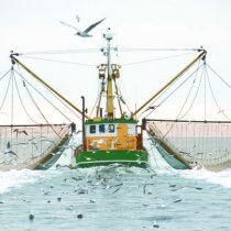 ONU: Eliminar subsidios de pesca salvaría millones de empleos en países pobres