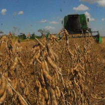 En Chile puedes ser multado por plantar semillas transgénicas que fueron modificadas para resistir la sequía