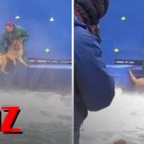 [VIDEO] Polémica por registro de maltrato animal durante filmación de película «A dog's purpose»