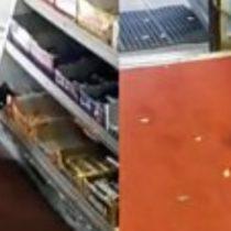Las ardillas que ya robaron más de 40 barras de chocolates de una tienda (y desesperan a sus dueños)