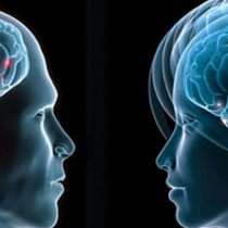 Psicobiólogo español afirma que el amor es ciego porque desactiva la corteza prefrontal