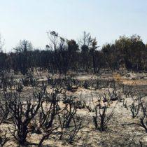 Mercado preocupado por el impacto de los incendios en el crecimiento del primer trimestre dada la estrechez fiscal que enfrenta el Gobierno