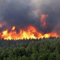 Conaf: 27 mil hectáreas quemadas por incendios forestales en todo el país