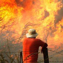 Devastadores incendios forestales y sus trágicas consecuencias para la economía y el medioambiente