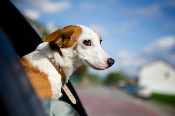 Cómo viajar seguro con las mascotas en vacaciones de verano
