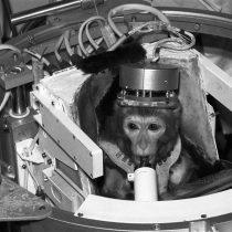 ¿Maltrato animal? Rusia anuncia que enviará un macaco en su próxima expedición a Marte