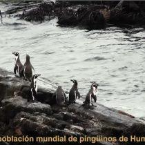 [VIDEO VIDA] #SalvemosLaHiguera: la campaña que busca impedir que refugio para la biodiversidad se transforme en Zona de Sacrificio