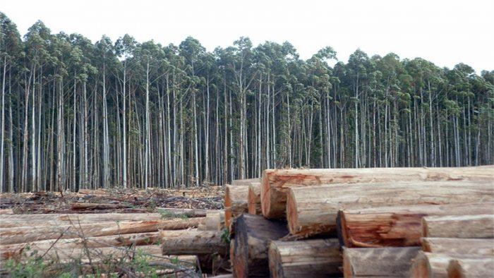 Organizaciones de Ecuador no quieren que su país copie modelo forestal chileno