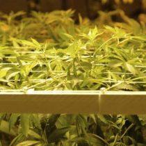 Más marihuana, menos accidentes: estudio relaciona el consumo medicinal con descenso de muertes por choques de tráfico