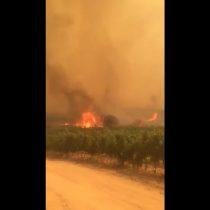 [VIDEO] El desolador registro en redes sociales del incendio forestal que consume a Pumanque