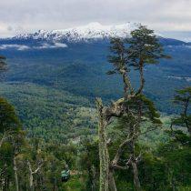 Reserva biológica Huilo Huilo abre al público el primer teleférico del sur de Chile