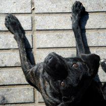 Proyecto de tenencia responsable de animales a un paso de convertirse en ley
