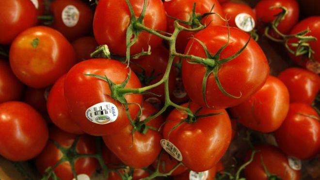 ¿Por qué los tomates de ahora no tienen gusto a nada?