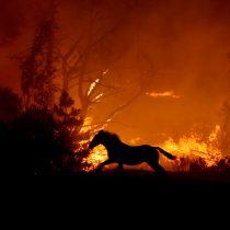 Expertos aseguran que daño a la biodiversidad por los incendios se compara al de las últimas glaciaciones