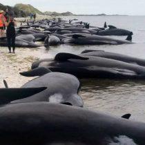 [VIDEO] Encuentran unas 300 ballenas muertas en Nueva Zelanda