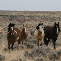 El cambio climático habría diversificado las especies de caballos