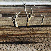 Fenómeno de la Gran Aceleración: estudio revela que en últimos 45 años la tasa de temperatura de la Tierra aumentó 170 veces por emisiones antropogénicas