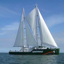 Barco de Greenpeace recorrerá Chile para frenar el avance de las salmoneras