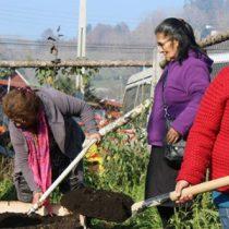 Huertas mapuches, en búsqueda de la sustentabilidad por el camino de la identidad
