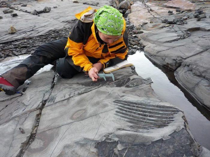 Científica chilena halla dinosaurio en trabajo de parto en Torres del Paine