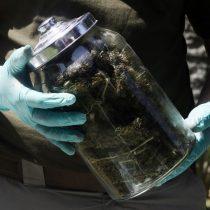 Droga en las Fuerzas Armadas: cerca de 300 funcionarios han sido sancionados