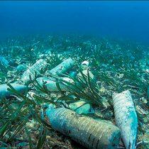 ONU lanza campaña mundial para acabar con residuos de plástico en los océanos