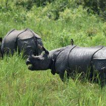 El parque natural donde es legal matar cazadores furtivos para proteger a los rinocerontes