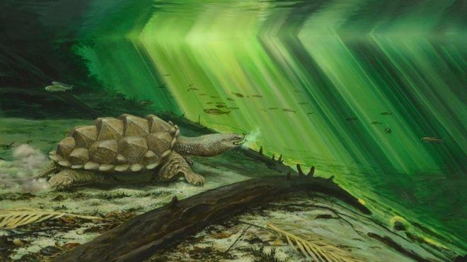 Por qué las tortugas adquirieron la habilidad de retraer el cuello (y no fue para defenderse)