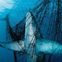 Pesca mundial: nuevas tecnologías son una amenaza mayor que el cambio climático