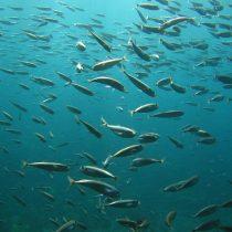 Chefs y científicos crean aplicación con recetas que contienen especies marinas no sobreexplotadas