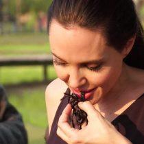 [VIDEO] Angelina Jolie enseña a sus hijos a cocinar tarántulas y escorpiones en Camboya