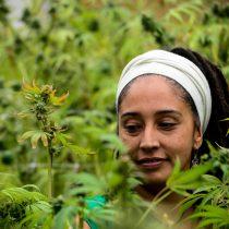 Marihuana contra el dolor: 186 pacientes con cáncer probarán fármaco de cannabis hecho en Chile