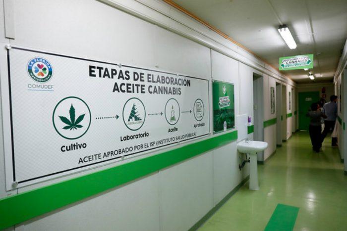 La Florida inicia primer estudio clínico con cannabis de Latinoamérica para tratar cáncer de mama y pulmón