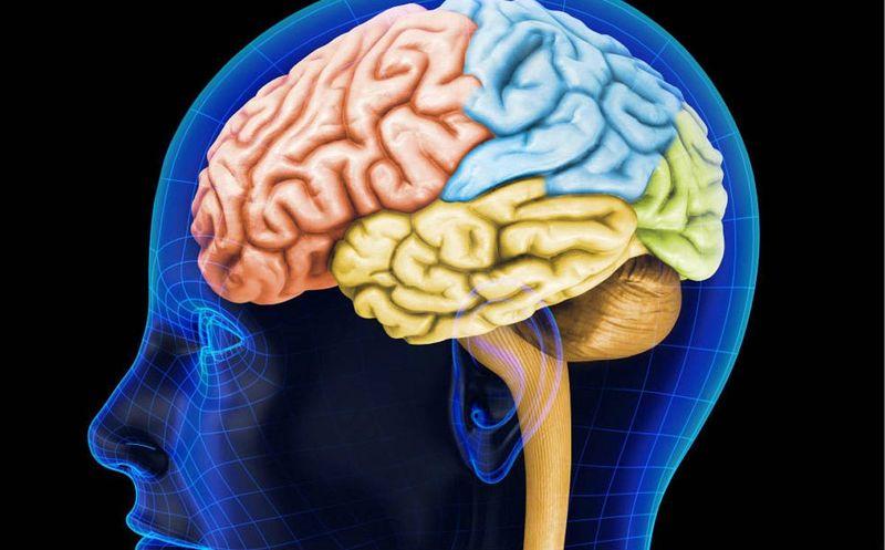 Con animales envejecidos probarán eficacia de terapias contra el Alzheimer