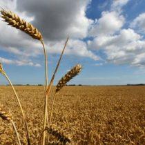 Los cultivos que están acabando con las aguas subterráneas del planeta