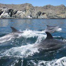 Amplio rechazo ambientalista a fallo de Tribunal Ambiental de Antofagasta que dio un nuevo respiro a Minera Dominga