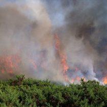 Incendios forestales: instituciones científicas critican inestabilidad del Estado y