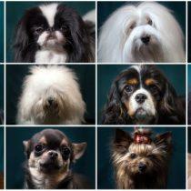 Dálmatas, chihuahuas, galgos… La razón por la que hay tantas razas de perros en el planeta