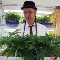 El castigo del fisco de EEUU a los vendedores de marihuana