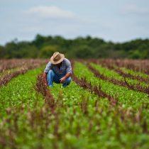 Las exportaciones de agroalimentos desde el sur de Chile y la crisis global de containers