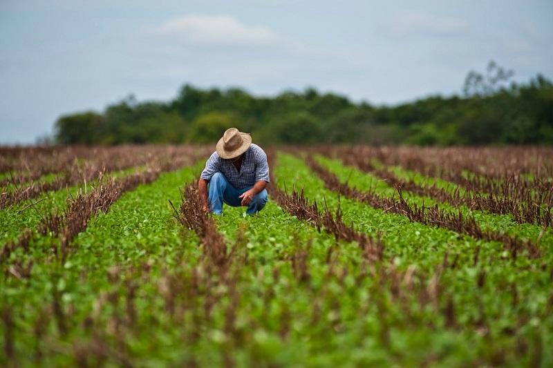Image Las exportaciones de agroalimentos desde el sur de Chile y la crisis global de containers